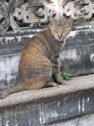more bangkok cats4