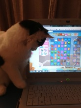 mogs & candy crush2