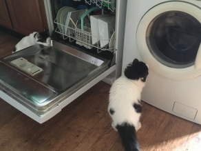 mogs & patch laundry dishwasher (6)