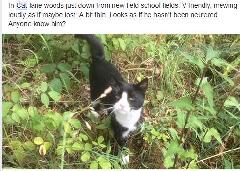 harold in hte woods
