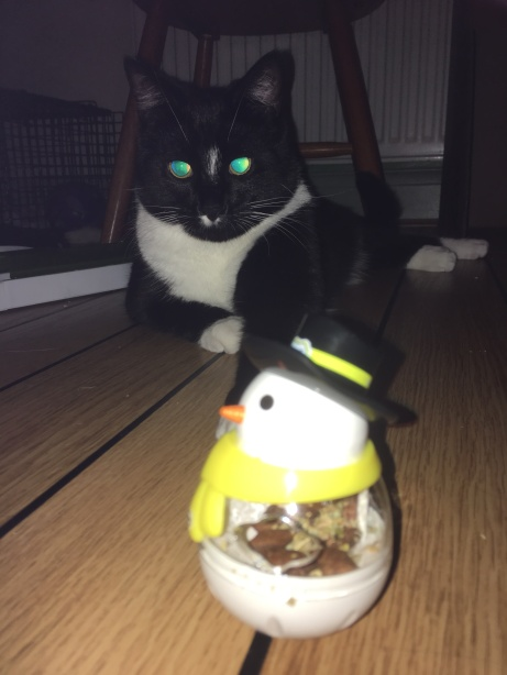 Dodger with dreamies