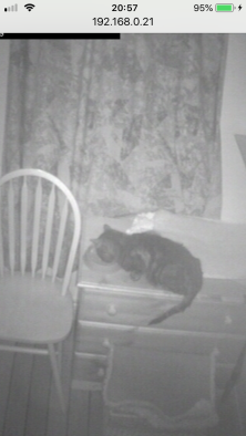 caught on webcam eating