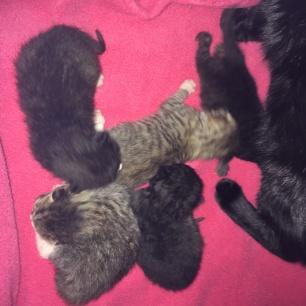 old kittens