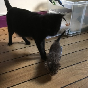 jette kittens leave the nest (6)