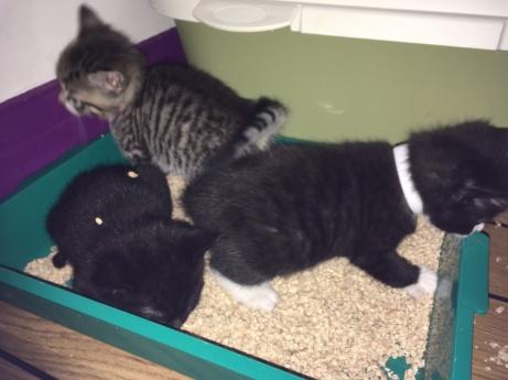 jette kittens litter tray (3)