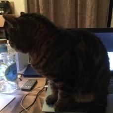 Howard - laptop