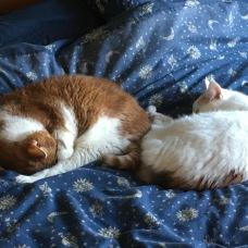 Jango & Honey bed